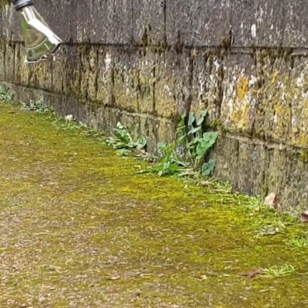 désherbage bord de mur